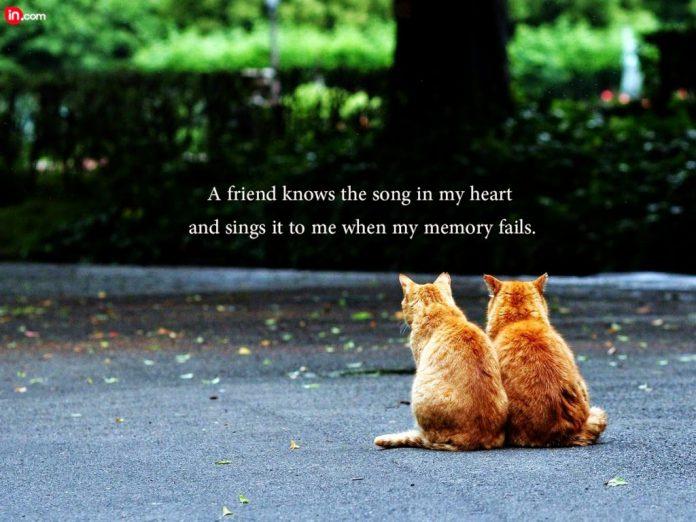 Những câu nói hay và ý nghĩa về tình bạn