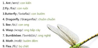 từ vựng tiếng anh về côn trùng