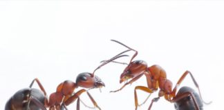 Các loại thuốc diệt kiến tốt nhất hiện nay