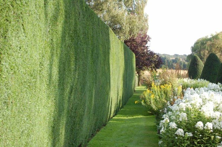 mẫu hàng rào bằng cây xanh