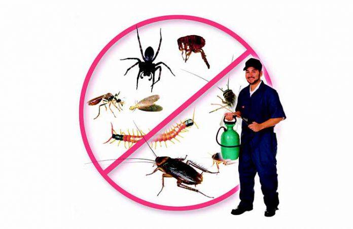 dịch vụ diêt trừ côn trùng