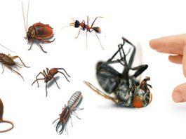 dịch vụ diệt trừ côn trùng